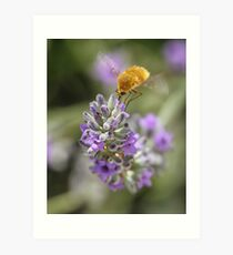 Insect studying flower Art Print