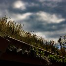 My Garden My Roof by arc1