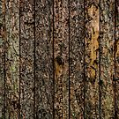 Rough Pine Planks by arc1