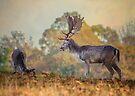 Fallow Deer being cheeky! by Sara Sadler