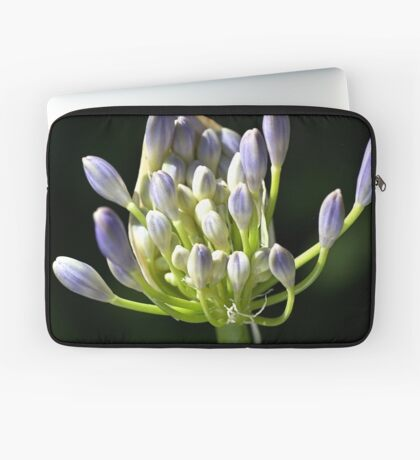 A Glow On Agapanthus Laptop Sleeve