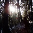 Winter  Sun Rays #16 by Dawna Morton