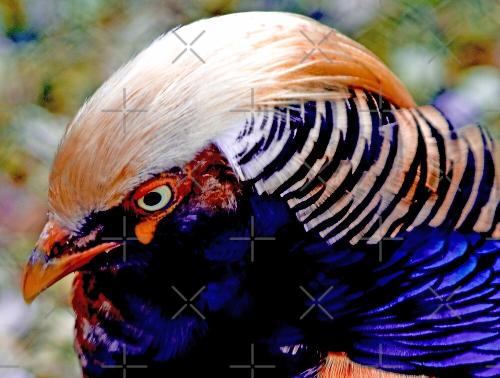Chinese Pheasant by Catherine Hamilton-Veal  ©