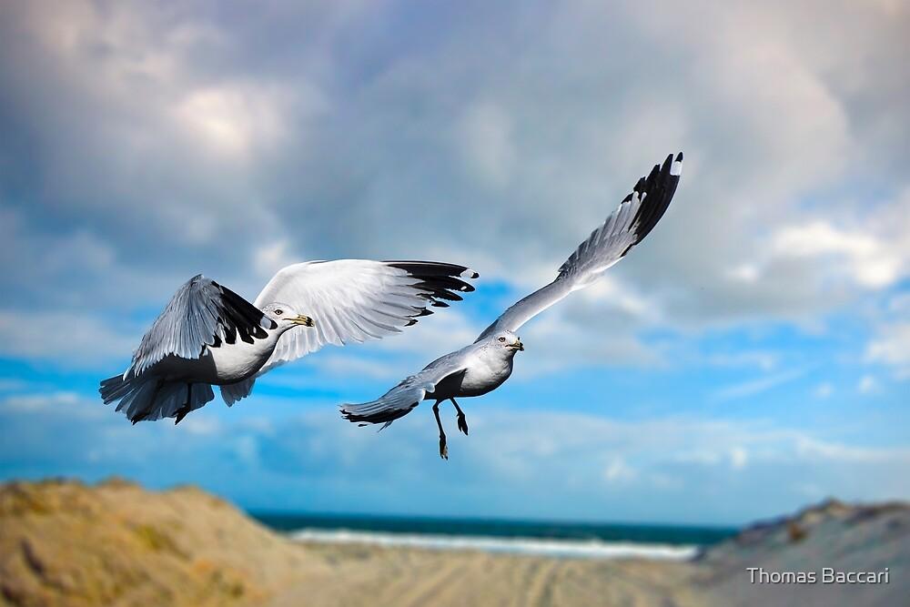 Garden City Gulls by TJ Baccari Photography