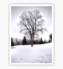 Tree in Landscape, Early Spring with Snow  Sticker