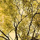 Beech Tree In Spring by SexyEyes69