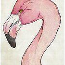 Flamingo profile by Brandy Heinrich