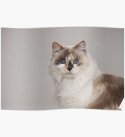 Mia my Kitty Poster