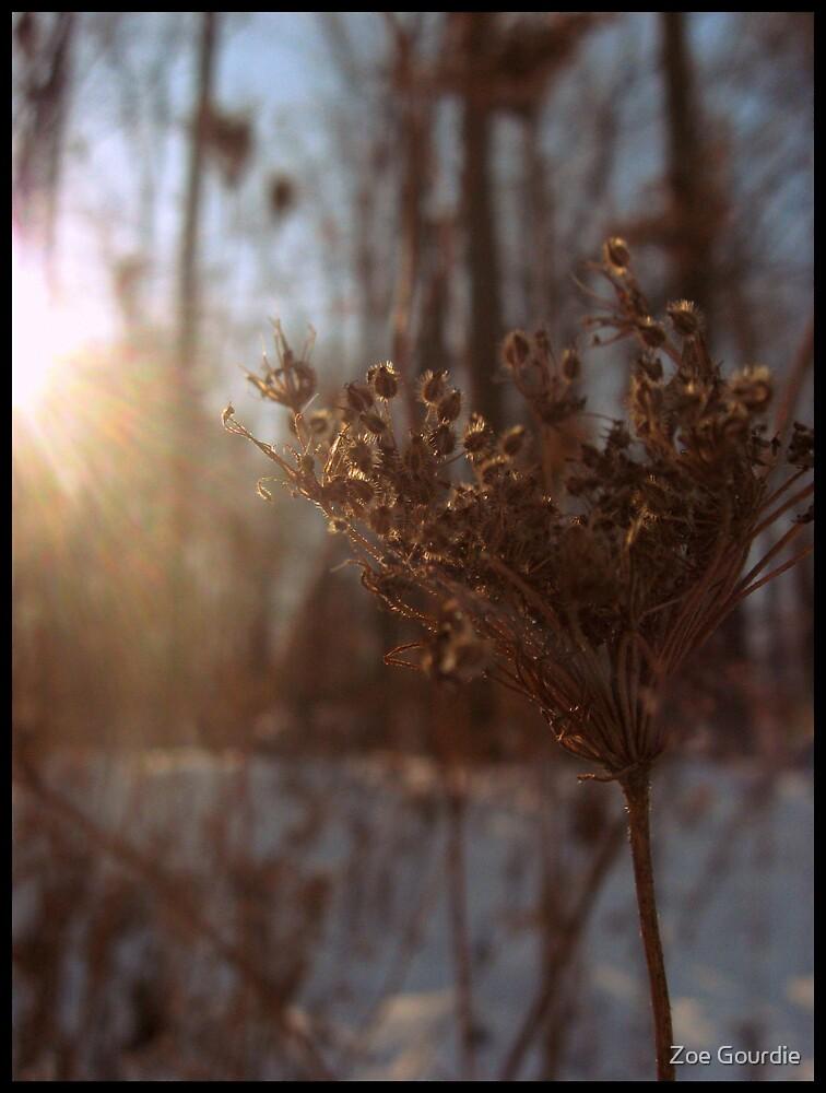 sunflared by schizomania