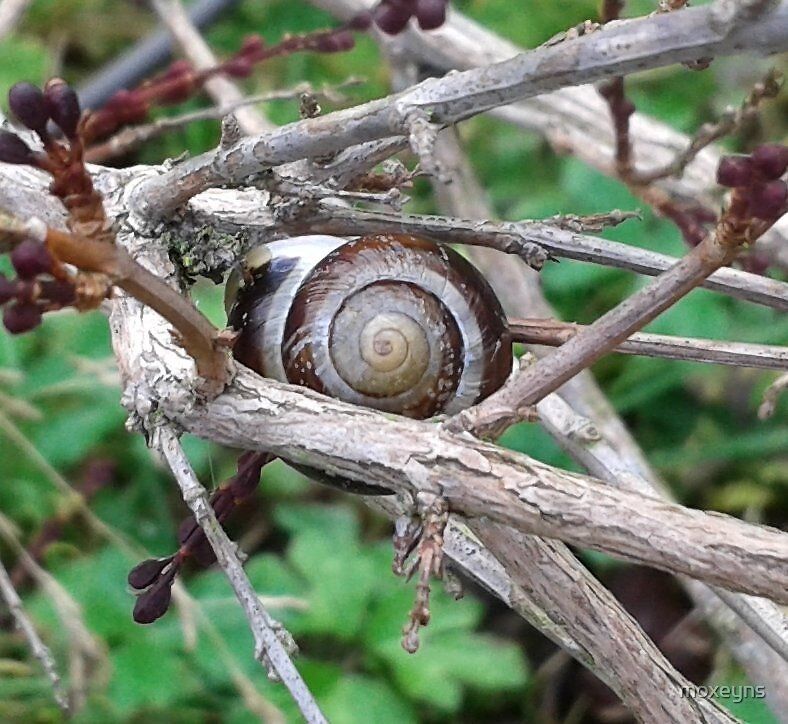 Tree snail by moxeyns