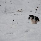 Scamp in the Snow! by Maddie