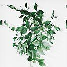 Seed Dreams by Okti W.