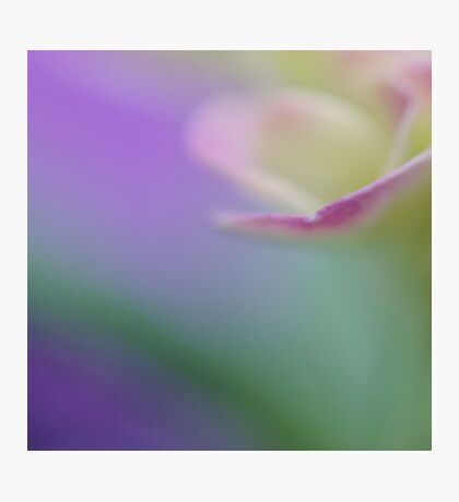 Play of Natural Colors Photographic Print