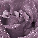 Dusty Purple Rose by AlexMac