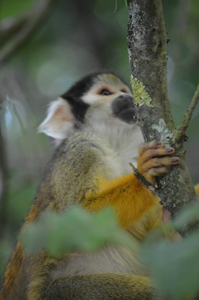 Climbing Squirrel Monkey by Jessamy83