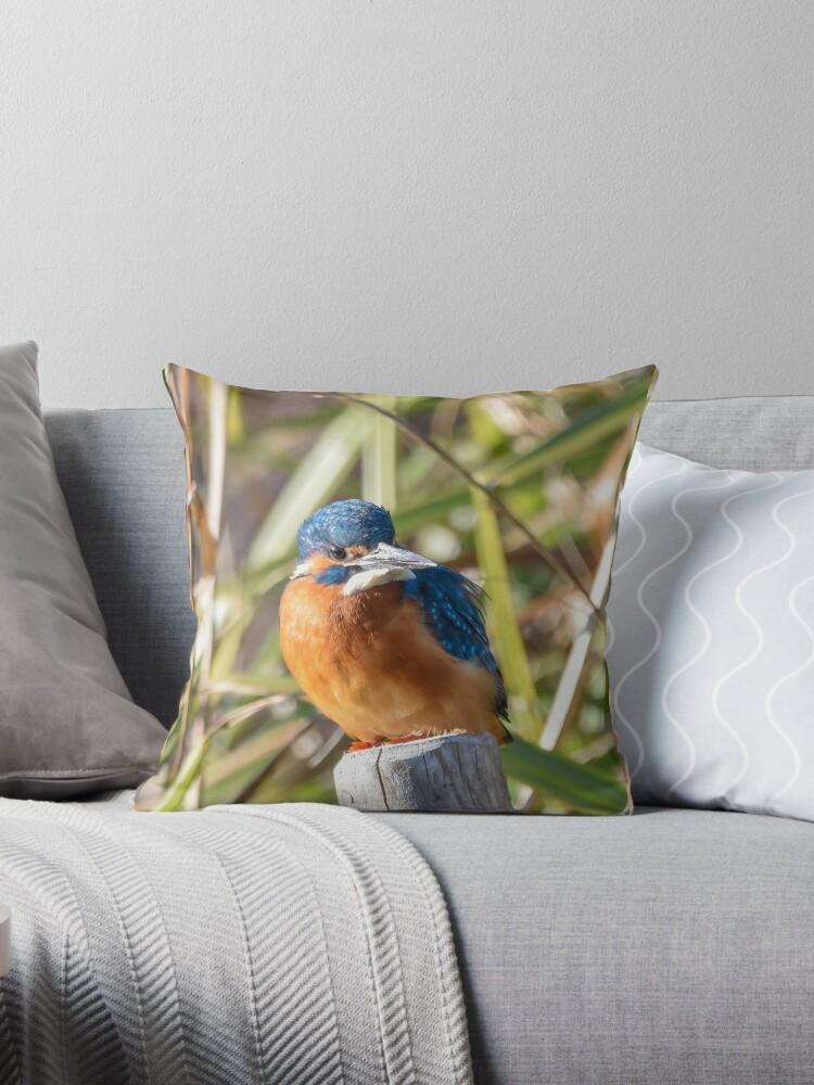 Beautiful Kingfisher by InterestingImag
