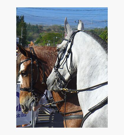 Mister Ed and Friend Photographic Print