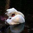 Swan in shambles by sstarlightss