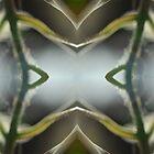 «Caleidoscopio de la naturaleza 25» de Rachael Martin