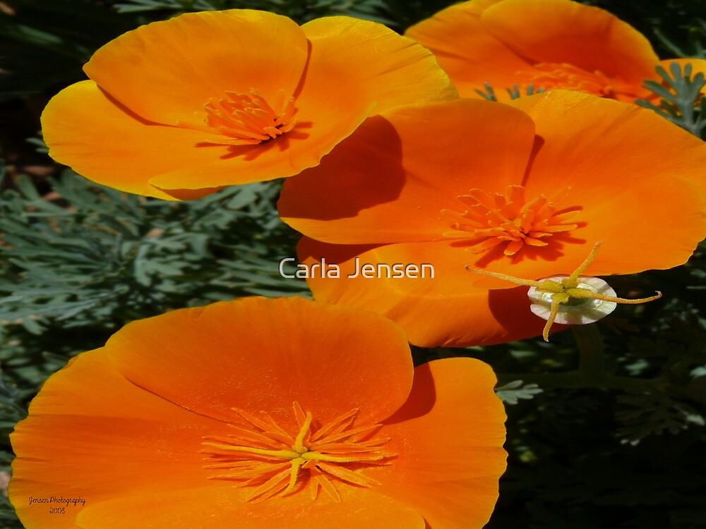 Orange Blast by Carla Jensen