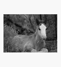 Salt River Colt Photographic Print