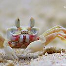 Sand Crab , by Trish Threlfall