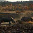 Stand off at dusk by Leon Rossouw
