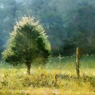 Cedar In Morning Light by Jean Gregory  Evans