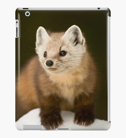 Pine Marten iPad Case/Skin