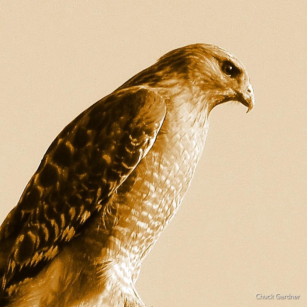 Portrait of a Red-Shouldered Hawk  #1 by Chuck Gardner