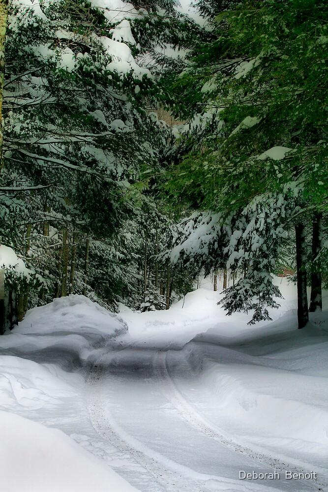 Evergreens In Snow by Deborah  Benoit