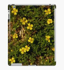 Tormentil in Shalwy Valley iPad Case/Skin