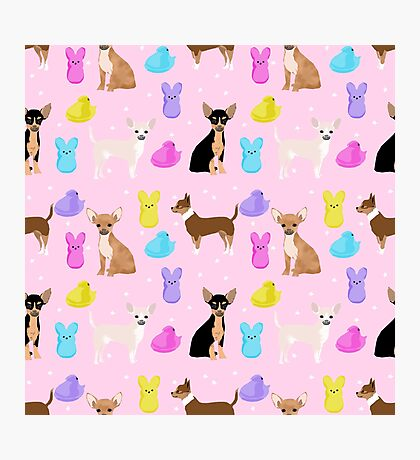 Chihuahua dog breed marshmallow peeps easter spring traditions cute dog breed gifts chihuahuas Photographic Print