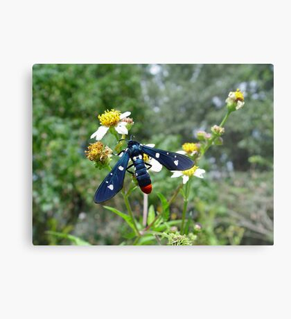 Polka-dotted Wasp Moth Metal Print