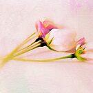 Still Life Blossoms by Jessica Jenney