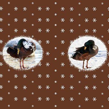 Running ducks in the snow by anatida