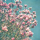 Pink Magnolia Blooms by OLIVIA JOY STCLAIRE