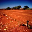 The Old Ghan by Benno