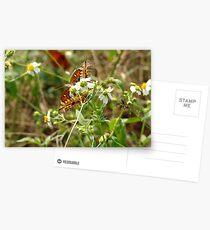 Variegated Fritillary Postcards
