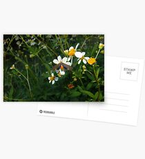 Dahanna atripennis Postcards