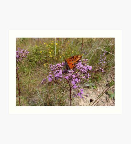 Gulf Fritillary in Ironweed Art Print
