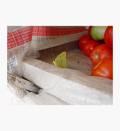 The Tomato Vendor - Common Sulphur Butterfly Photographic Print