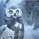 Snowy Owl Photo-realistic Wildlife Print by thespottydogg