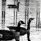 Geese Black&White by TLWhite