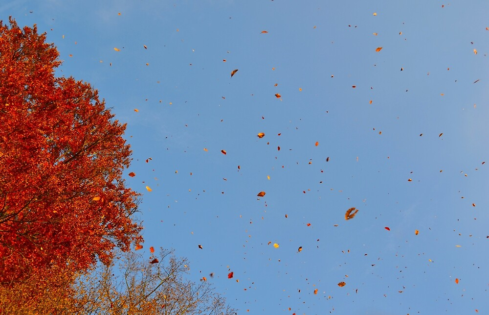 red leafs falling by palinta