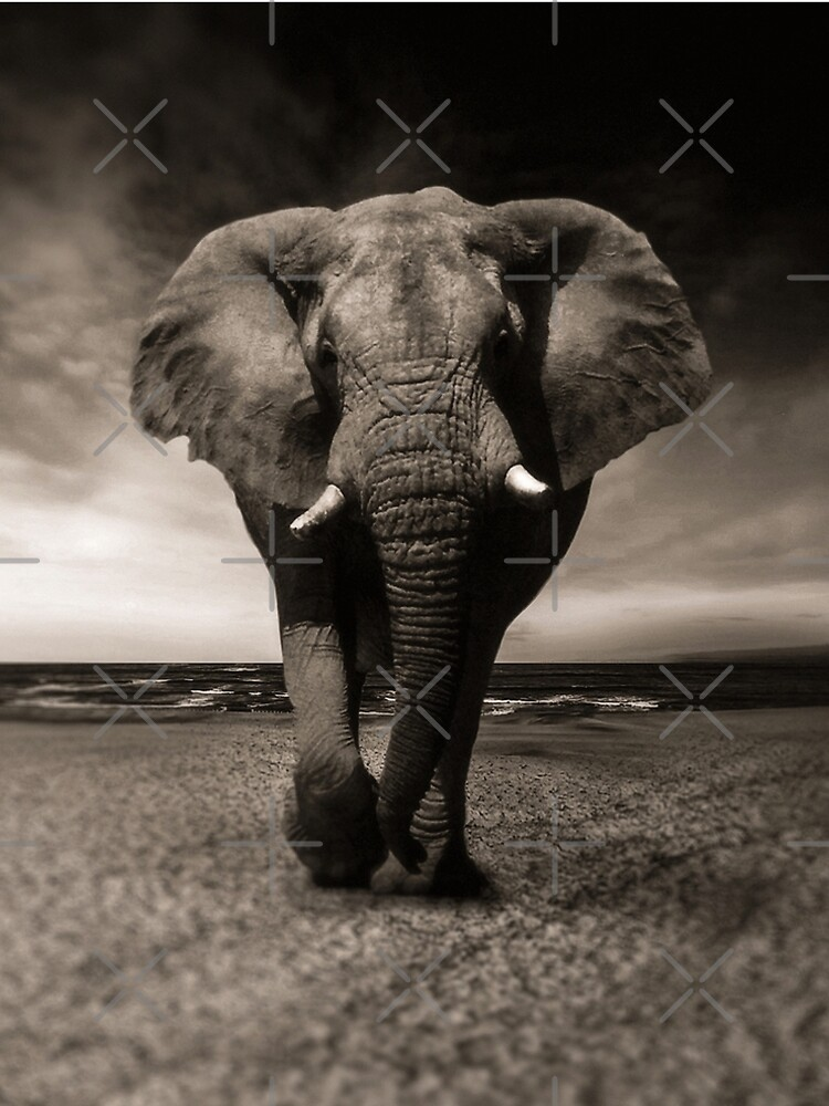 Elephant Black and White Photo-realistic Print  by thespottydogg
