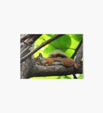 Lazy Squirrel Art Board