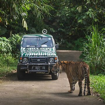 Tracking a Tiger by wildlifestyleco