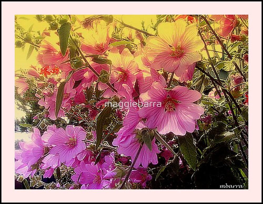 Pretty in Pink by maggiebarra