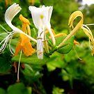 Pretty Flower by Dave Cauchi